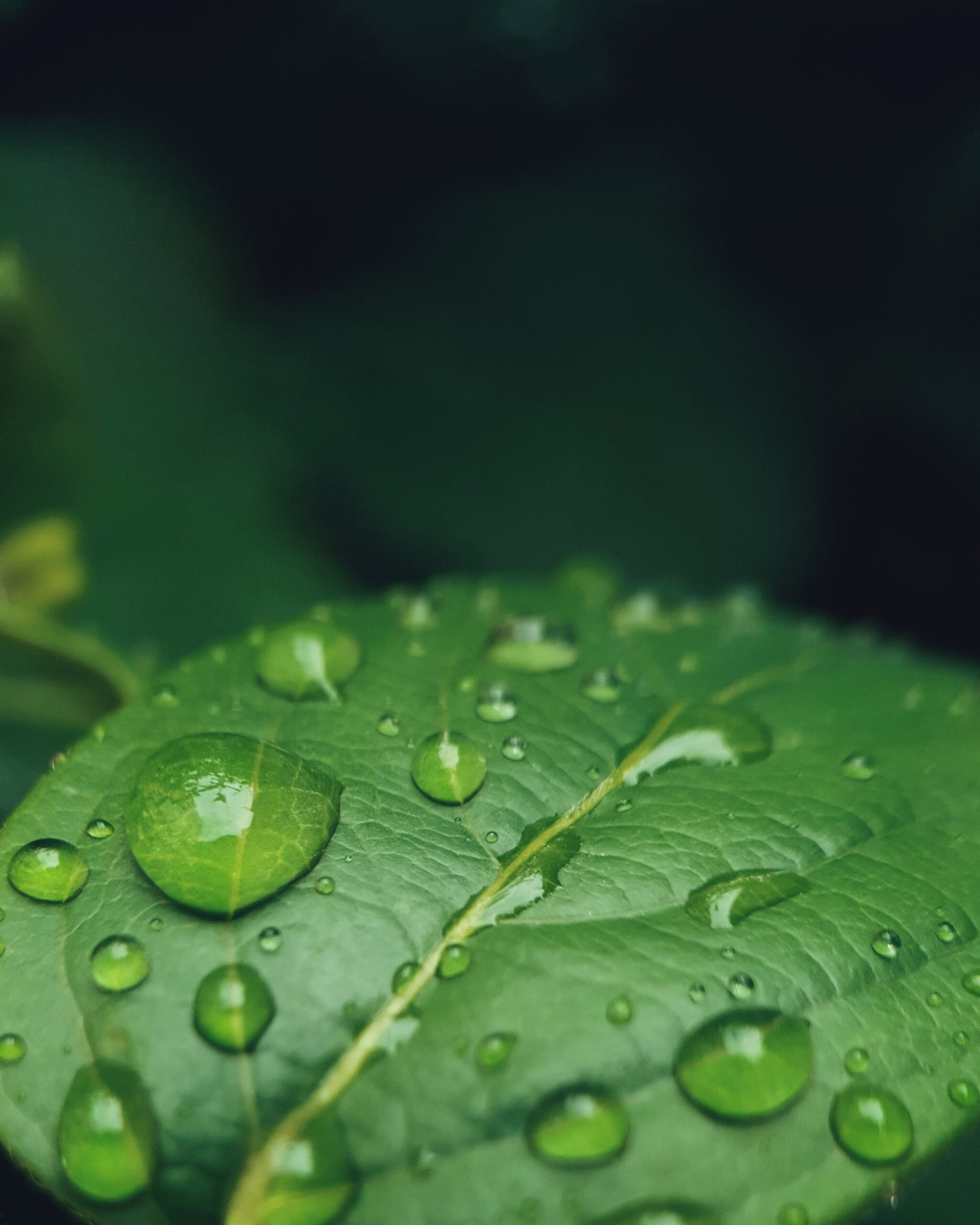 importanza della fotosintesi