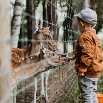 riconoscere uno zoo etico