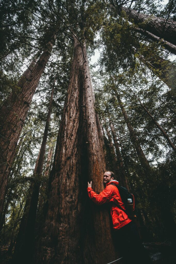 persona che abbraccio un albero